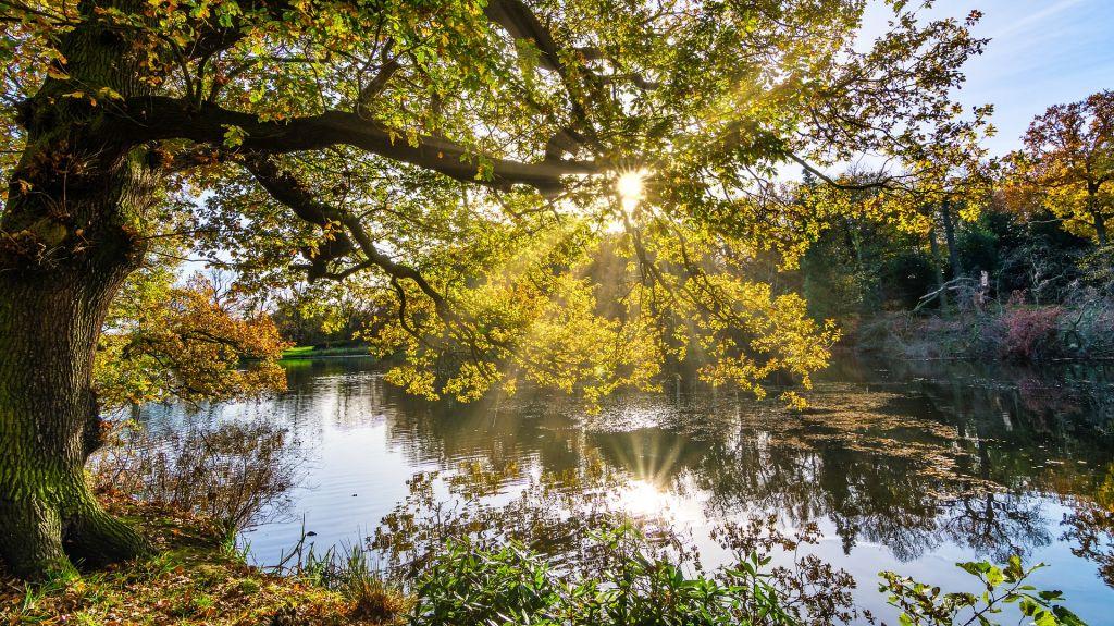 Naturbild med sjö och en stor ek
