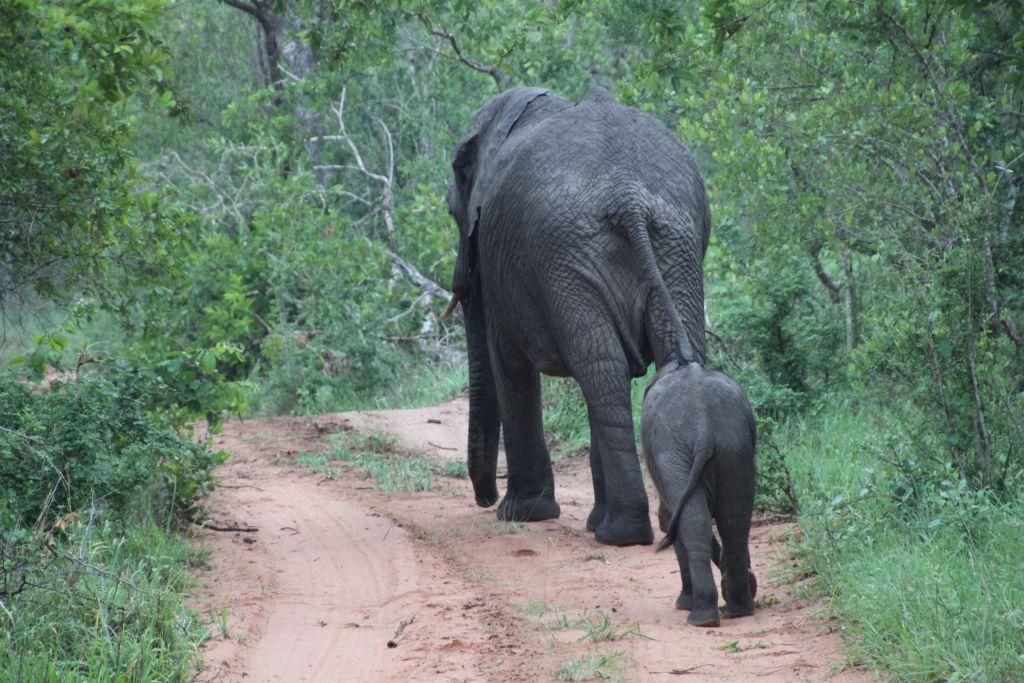 Bild av elefant som leder